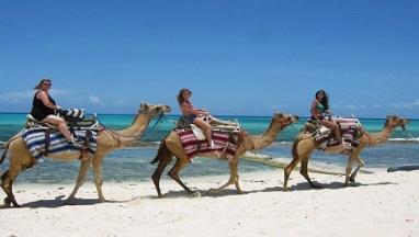 Camel Safari / Horse back riding