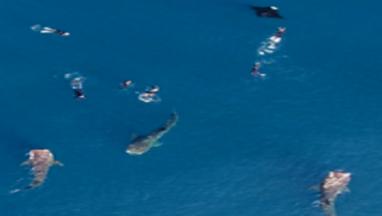 Whale Shark Adventure.