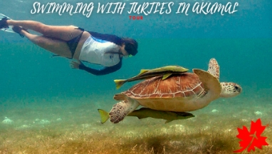 Swimming with turtles in Akumal Tour