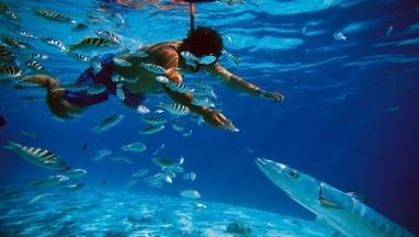 Nado en arrecife y cenote en excursion privada