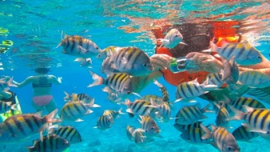 Cozumel and Playa del Carmen Tour